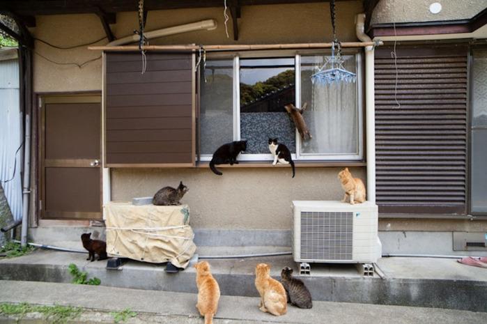 смешные кошки фото 13 (700x465, 111Kb)