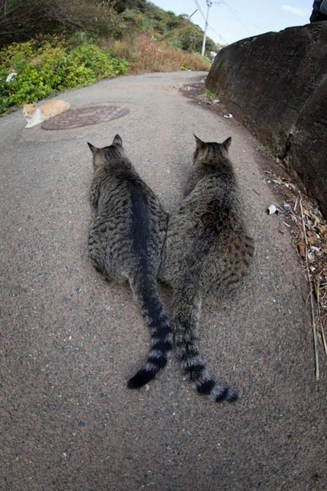 смешные кошки фото 15 (466x700, 275Kb)