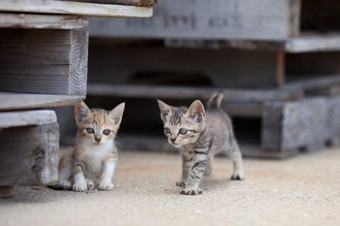 смешные кошки фото 17 (700x465, 71Kb)