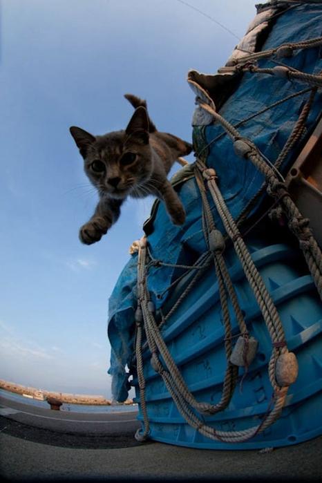 смешные кошки фото 19 (466x700, 200Kb)