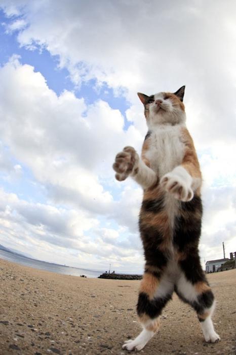 смешные кошки фото 20 (466x700, 186Kb)