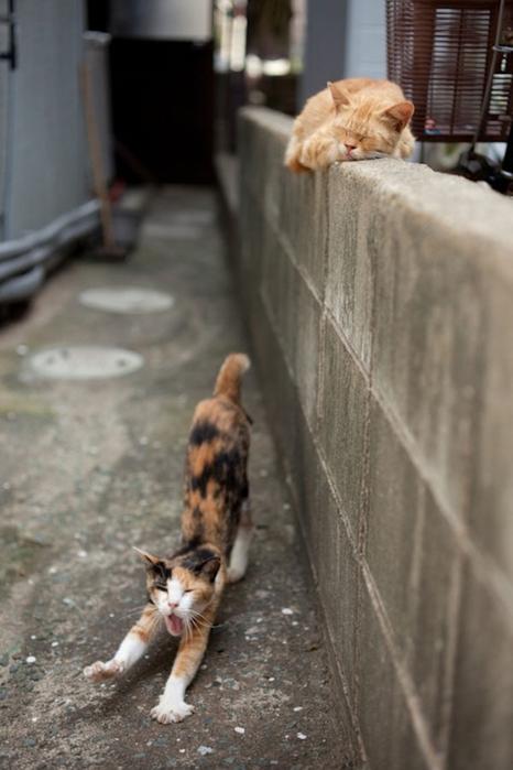 смешные кошки фото 22 (466x700, 189Kb)