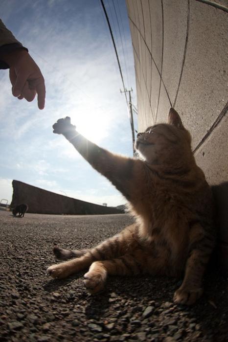 смешные кошки фото 24 (466x700, 211Kb)