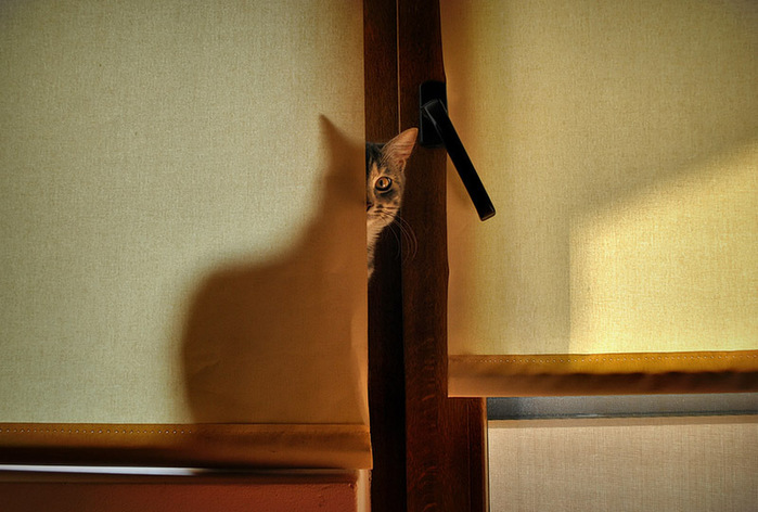 прикольные фото кошек (700x472, 104Kb)