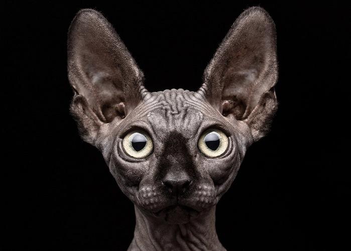 прикольные фото кошек 1 (700x500, 73Kb)