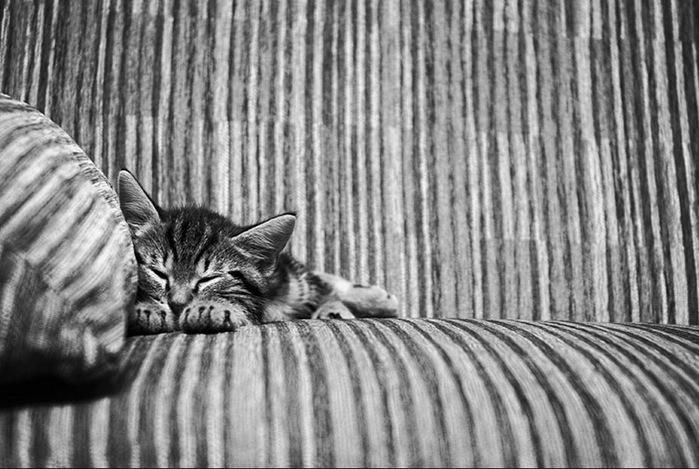 прикольные фото кошек 3 (700x469, 119Kb)