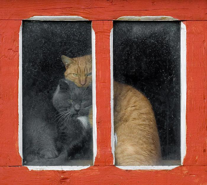 прикольные фото кошек 7 (700x625, 196Kb)