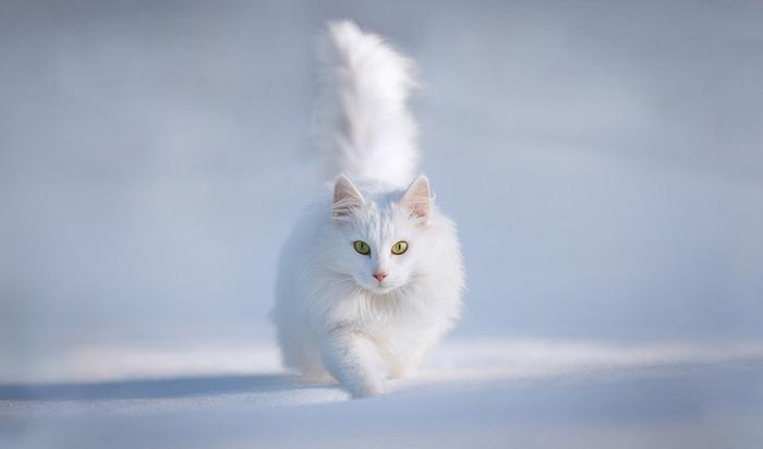 прикольные фото кошек 12 (700x412, 36Kb)