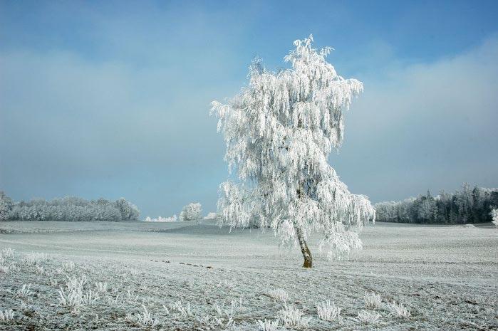 Ах, зима, зима... 28389