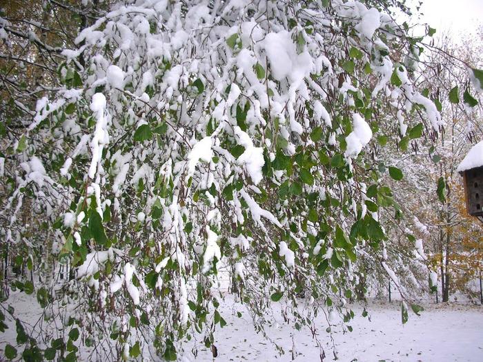 Ах, зима, зима... 61879