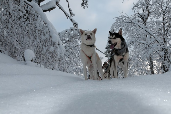 Ах, зима, зима... 54406