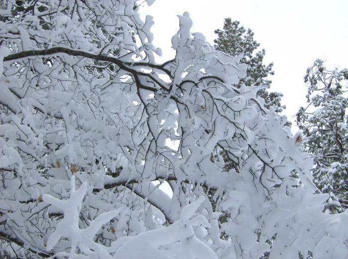 Ах, зима, зима... 10260