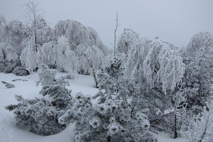 Ах, зима, зима... 25119