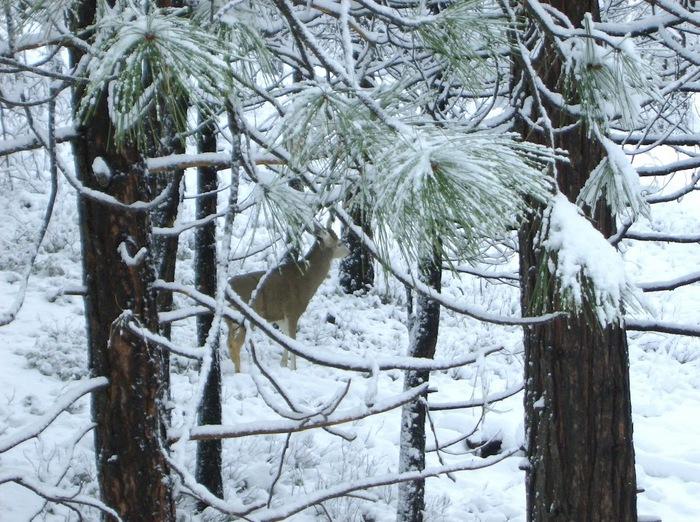 Ах, зима, зима... 23401