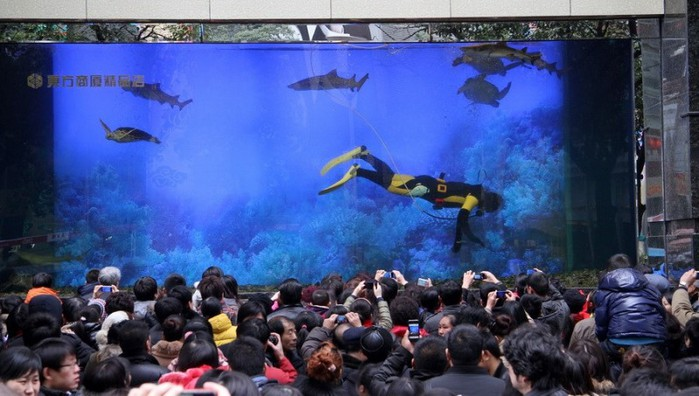 aquarium09-800x453 (700x396, 84Kb)