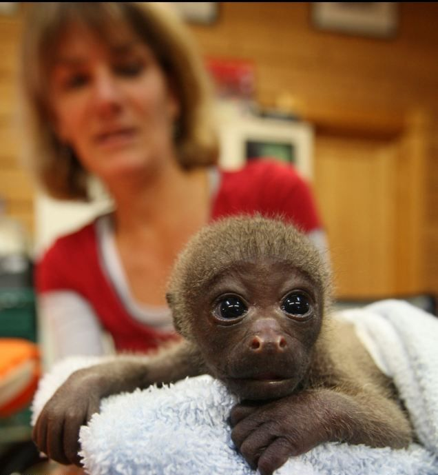 смешная обезьянка фото (636x689, 46Kb)