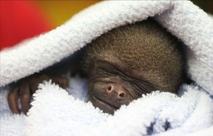 смешная обезьянка фото 4 (700x449, 39Kb)