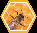 beewax (143x127, 27Kb)