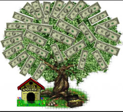 Денежное дерево фото уход в домашних условиях