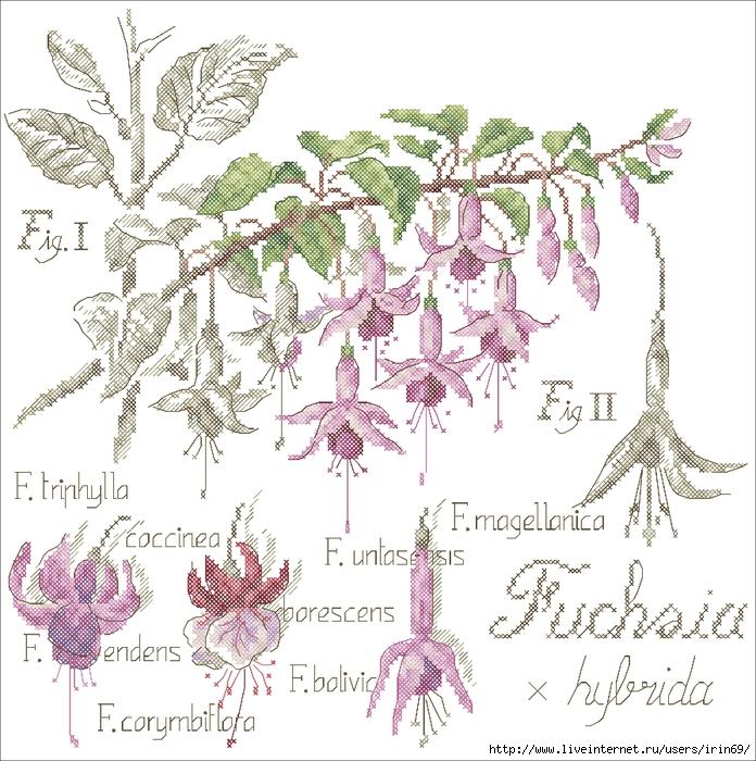 Фото Цветы и прочая ботаника - Фото - I.UA.