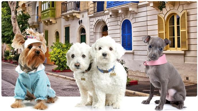 Пошив праздничных костюмов для собак.