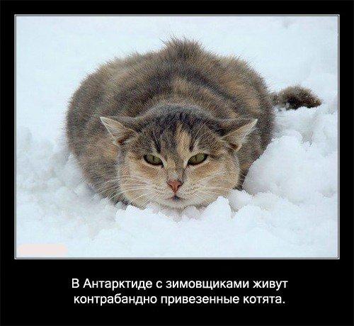 факты о кошках и котах