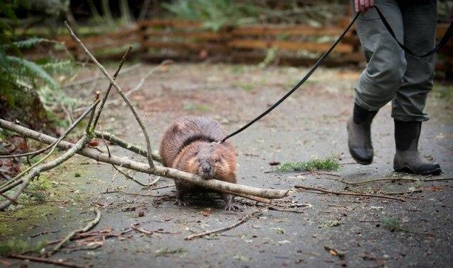 зоопарка-уборке-помогает-картинки кошки-собаки-смешные животные-котэ_6275117711 (640x379, 68Kb)