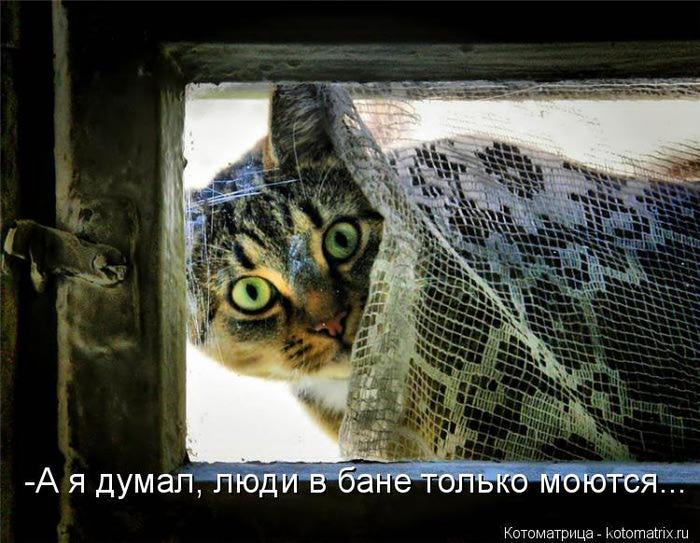kotomatritsa_6y (700x543, 76Kb)