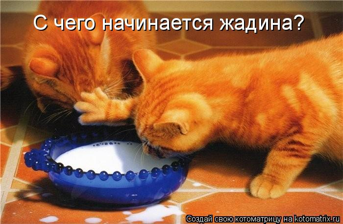 kotomatritsa_K5 (700x459, 60Kb)