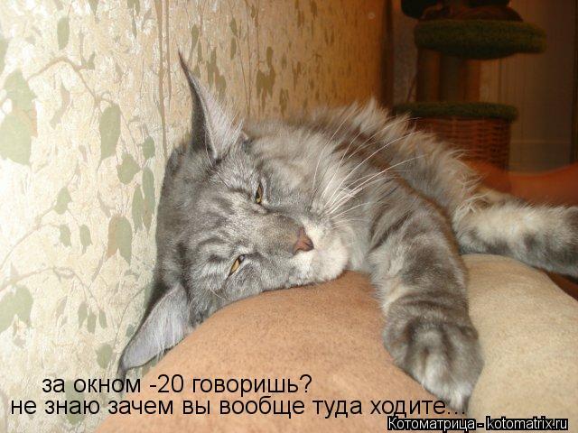 kotomatritsa_Q8 (640x480, 58Kb)
