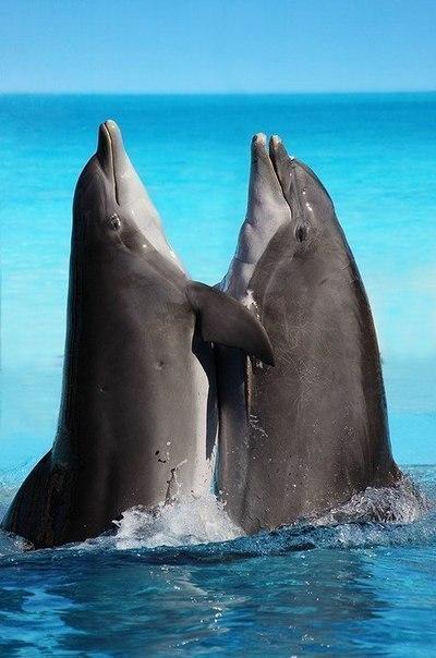 дильфин (1) (400x604, 49Kb)