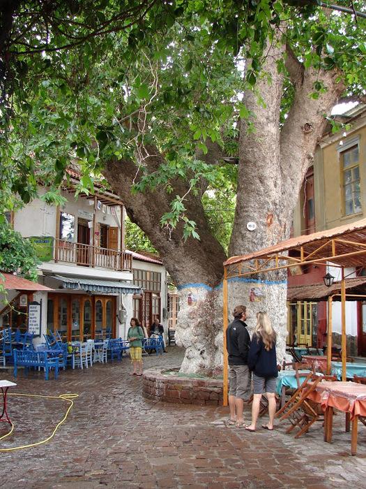 Остров Лесбос - Остров одетый в зелень сосен, оливковых деревьев и дубов. Часть 1 98916