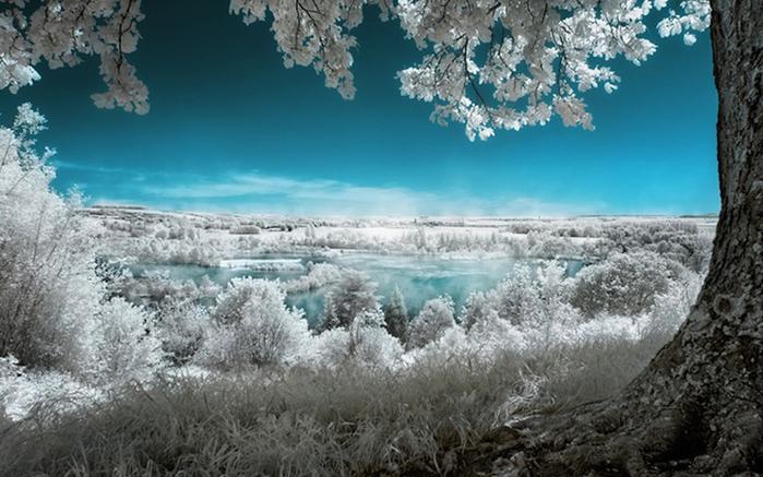 инфракрасные пейзажи фото 1 (700x437, 197Kb)