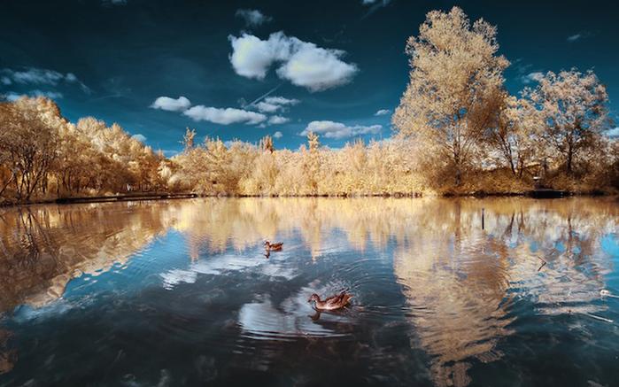 инфракрасные пейзажи фото 5 (700x437, 213Kb)