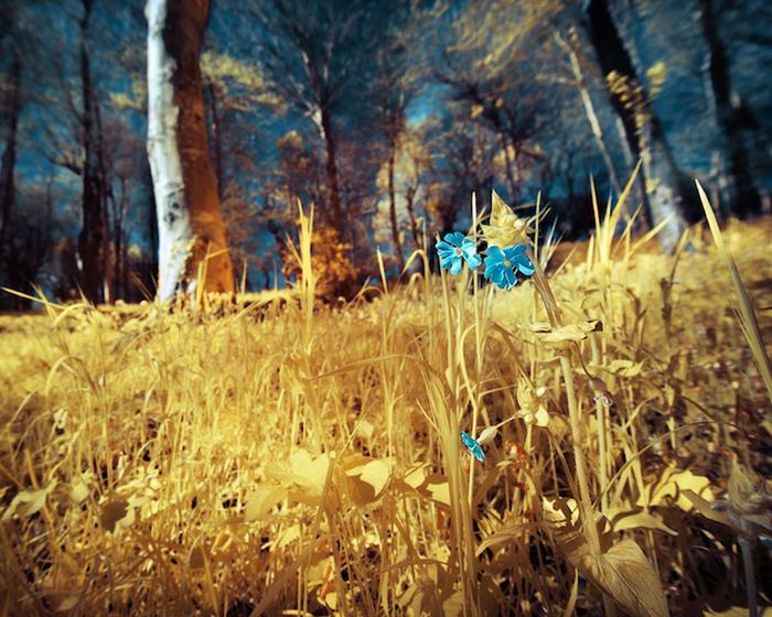 инфракрасные пейзажи фото 10 (700x560, 307Kb)