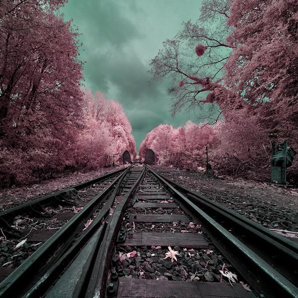 инфракрасные пейзажи фото 12 (600x600, 293Kb)