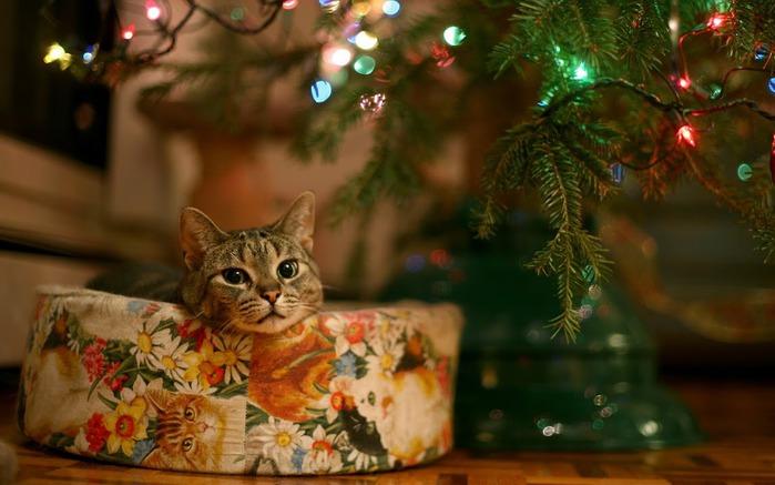 С наступающим Новым Годом и Рождеством. 40783