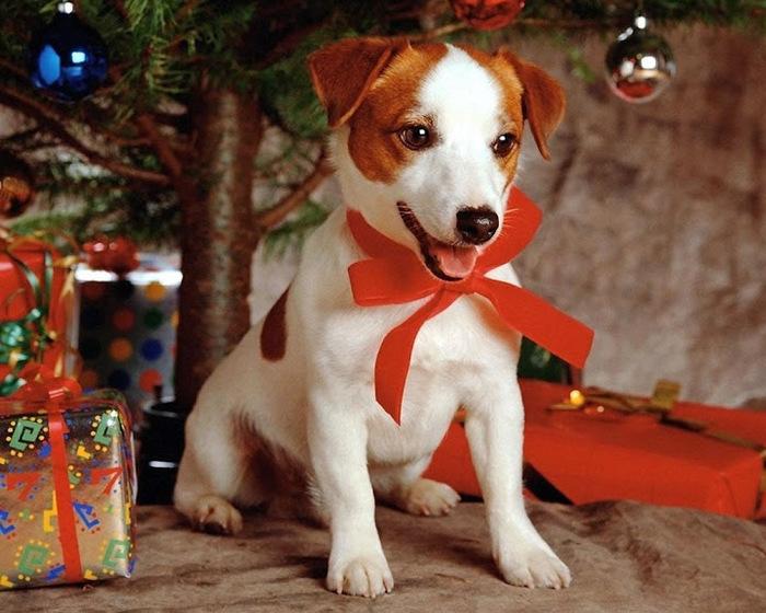 С наступающим Новым Годом и Рождеством. 21243