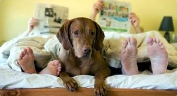 Cómo-hacer-que-mi-perro-duerma-en-su-propia-cama (1) (360x197, 54Kb)