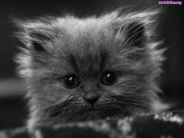 czarne-oczy-kotek (700x525, 130Kb)