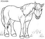 Превью лошадь (700x609, 132Kb)