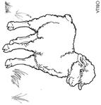 Превью овца (670x700, 108Kb)