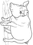 Превью свинья (511x700, 100Kb)