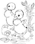 Превью утки (551x700, 171Kb)