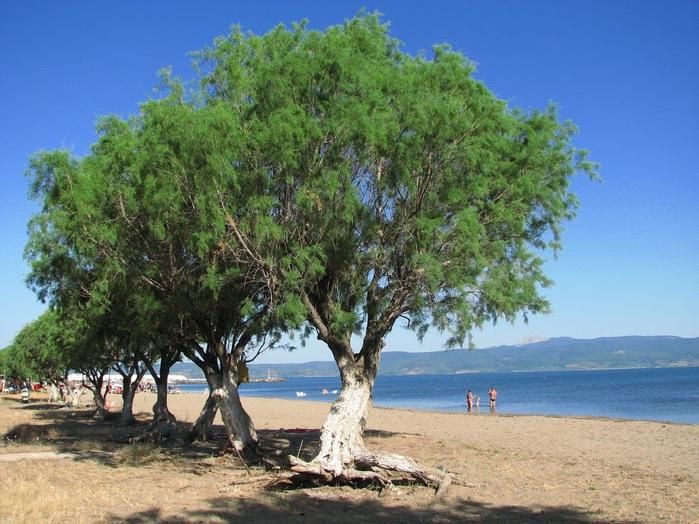 Остров Лесбос - Остров одетый в зелень сосен, оливковых деревьев и дубов. Часть 1 76872