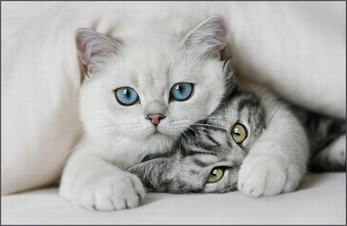 4783240_cats_03 (700x457, 35Kb)