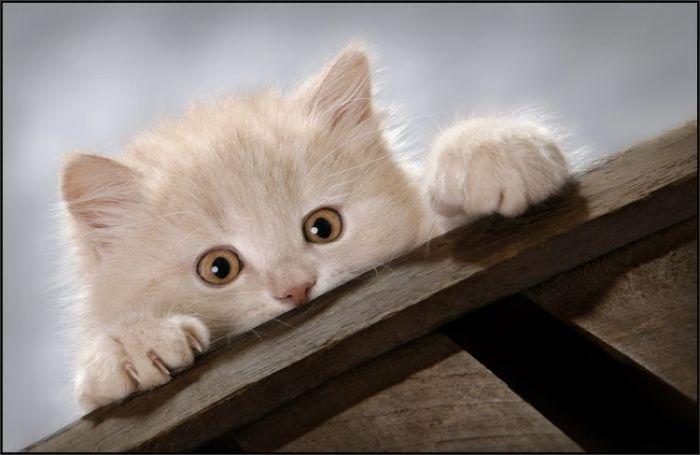 4783240_cats_16 (700x455, 35Kb)