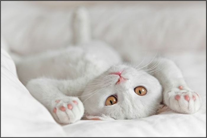 4783240_cats_21 (700x468, 25Kb)