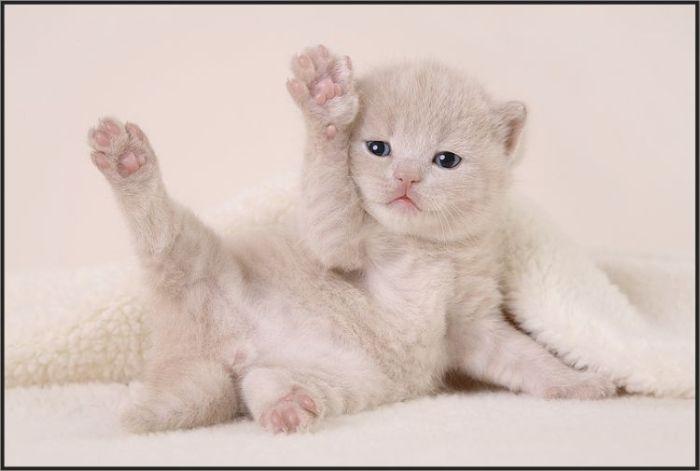 4783240_cats_32 (700x471, 27Kb)