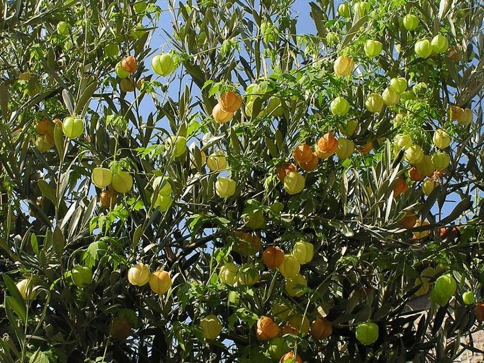 Остров Лесбос - Остров одетый в зелень сосен, оливковых деревьев и дубов. Часть 1 19794